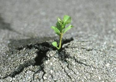 plant growing through asphalt, germany